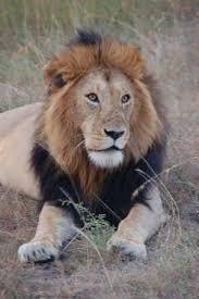 pictures of kenya animals