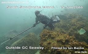 free dive spearfishing