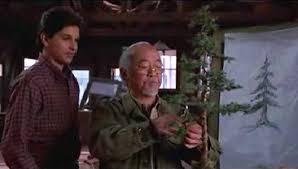 karate kid bonsai tree