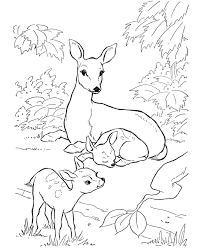Deer Coloring Pages Family