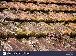 moss and lichen covered clay roof tiles positano italy stock photo