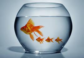 poissons se reproduisent que faire