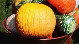Pumpkin Picking Farm Long Island Ny by Fun Fall Activities On Long Island