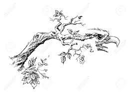 Drawn eagle branch drawing 8