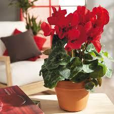 dormir avec une plante dans la chambre je mets quelle plante dans ma chambre tendances déco déco