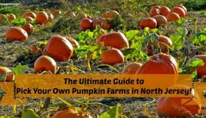 Best Pumpkin Picking Bergen County Nj by The Complete Guide To North Jersey Corn Mazes Hayrides And Fall