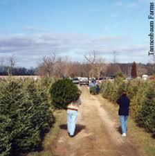 Tannenbaum Christmas Tree Farm Michigan by Christmas Trees Integrated Pest Management Program