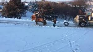VIDEO: Horses Pull Stuck Semi-truck Up Icy Hill A Red Semitruck Pulls A White Crete Trailer Along Rural Oregon Wow Chevy Stuck Semi Truck Diesels In Dark Corners Ii Georgia Rc Trucks Pulling Car Nice Adventures Beast Monster Youtube Twt Green Kenworth White Stock Photo Edit Now N Roll Bedford 2017 By Asttq 4k Youtube Man Pulls Semitruck To Raise Money For Military Families Full Pull Productions Tractor Eriez Speedway Modified Volvosemitruck Jk Moving Horses Pull Stuck Up Icy Driveway Video Goes Viral