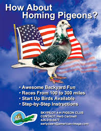 How About Racing Pigeons A Tame Pigeon In Our Back Yard Youtube 378 Best Pigeons Doves Images On Pinterest Beautiful Birds Hd Big Dove Pigeons Doves White Gray Eating Seed Backyard Flock Of Bandtailed Cramming Into Bird Feeder My First Backyard Chickens Building Loft For New Need Info Faest Sprinter Racing Modena Food And Profit Cooldesign Backyard Architecturenice Busy Their Foods My Help Me Identify The Gender This