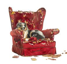 How To Keep Dogs Occupied When They¿re Home Alone - Howard County ... Faux Suede Pet Fniture Covers For Sofas Loveseats And Chairs Comfort Research Big Joe Bagimals Dawson The Dog Bean Bag Armchair Shih Tzu Lap On The Stock Photo Image 350298 Dog Cat Chamomile Amazoncom Sure Fit Quilted Throw Sofa Slipcover Taupe King Sitting His Throne 1018169 Shutterstock Antique Asian Chair Chinese Export Wood Carved Dragon Lion Foo Me My Dogcat Fold Out Bed With Protector Available In Dogs Amazoncouk Boxer Destroyed A Leather Armchair Alone At Home Damaged Hound Buttonback Occasional Loaf