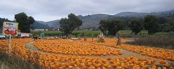 Half Moon Bay Glass Pumpkin Patch by Living Well With A Bad Diagnosis Lung Disease October 2011