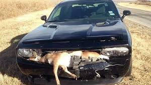 Roadkill Taste Test   Sportsman Channel 2017 Ford F150 Ssv Game Warden Police Truck Youtube 2010 State By Tr0llhammeren On Deviantart Lore Friendly San Andreas Skins Department Of Fish The Worlds Best Photos Gamewarden And Truck Flickr Hive Mind Texas Wardens Head To Florida Help After Irma Nbc 5 Dallas 2016 Nissan Titan Xd Turbodiesel V8 Is The Super Duty Exceeds Driving Expectations Catching An Illegal Trapper North Woods Law Suv Crashes Into Game Wardens Us Route 7 Rutland Herald Skin Pack 8 Vehicles Vehicle Twitter Stay Safe Dont Risk Wardenforest Serviceus Wildlife For Slicktop Silverado
