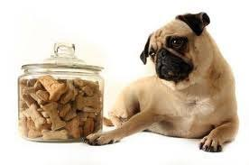 Luckys Bed And Biscuit by Have A Doggitylicious Day It U0027s International Dog Biscuit