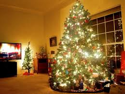 Amazon To Sell Christmas Trees