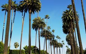 California Tumblr Photography Palm Trees Wallpaper WSW2025192