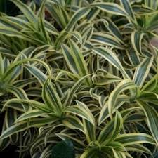 plantes vertes d interieur plantes d intérieur plantes et jardins