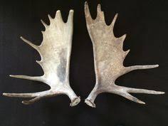 true rustic artwork weathered steer skull professionally mounted