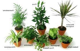 plantes pour bureau plante pour bureau location plante pour le bureau chaynik info