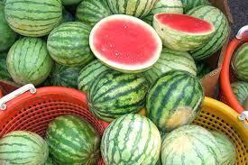 Fertilizer For Pumpkins And Watermelons by Watermelon Farming Tips Farming Solutions From Windmill