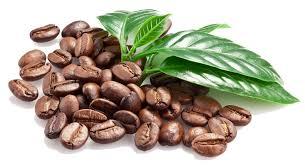 Cocoa Bean Clipart Coffee Plant 3
