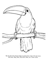 Toucan Bird Identification Drawing Coloring Page Free Printable Pages Featuring Wild Animals