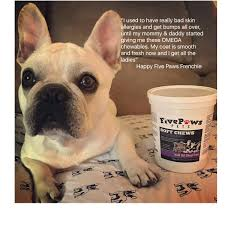Do All Dogs Shed Their Fur by Amazon Com Fish Oil For Dogs Shed Free Pure Krill Oil Soft