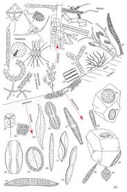 Stunning Design Microbiology Coloring Book Beautiful The Gallery