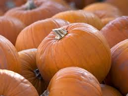 Pumpkin Patch College Station 2014 by Pumpkin Patches In Arizona 14 Pumpkin Patches To Visit In