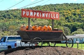 Tims Pumpkin Patch by Best Pumpkin Patches In Upstate Ny 21 Picking Destinations For