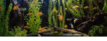 aquarium poisson prix aquariums animalerie jardiland