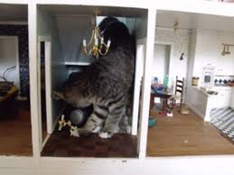 cat in house photo of cat destroying dollhouse goes viral on reddit imgur