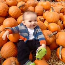 Pumpkin Patch Sf by Best Pumpkin Patches And Farms In The San Francisco Bay Area