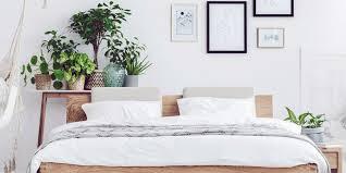 pflanzen im schlafzimmer diese 6 arten sind am besten
