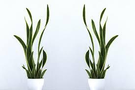 welche pflanzen eignen sich fürs schlafzimmer keno kent