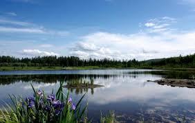 Wedgewood Wildlife Sanctuary Fairbanks Reviews