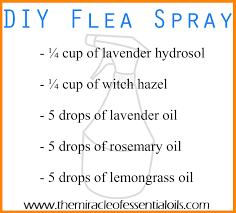 Homemade Flea Powder For Carpet by Diy Essential Oil Flea Spray The Miracle Of Essential Oils
