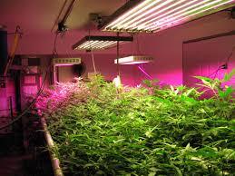 best lights for growing plants solidaria garden