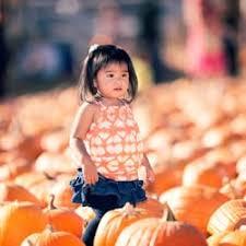 Pumpkin Patch Near Santa Clarita Ca by Lombardi Ranch Closed 17 Photos U0026 13 Reviews Farmers Market