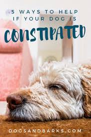 Dog Constipation Treatment Pumpkin by 5 Ways To Help If Your Dog Is Constipated Dogs And Bark