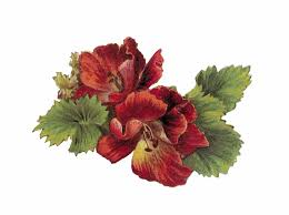 Maroon Flower Cliparts