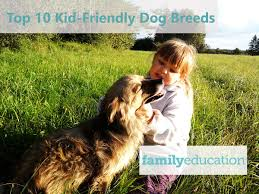 No Shed Dog Breeds Large by What Kind Of Dog Should We Get Dog Breeds For Kids Familyeducation