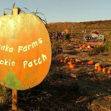 Best Pumpkin Patch Torrance by Tanaka Farms 2403 Photos U0026 606 Reviews Fruits U0026 Veggies 5380