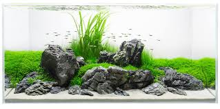 Lovely Ground Cover Planted Around Stunning Stones. Simple ... Aquascape Designs Surripuinet Aquascaping Live Rocks In Your Saltwater Aquarium Columns A Saltwater Tank Callorecom Need Ideas General Rfkeeping Discussion Week 3 Aquascaping 120 Gal Rimless Update Youtube 55g Vertical Tank Ideas Saltwaterfish Forum Aquascape With Rocks Google Search Aquariums Pinterest Bring Back The Wall Rock News Reef Builders Walls For Building Tiger Fish Aquascapinglive Rock Help Tcmas Forums