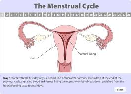 Thick Uterine Lining Shedding During Period by Best 25 Menstrual Cycle Calculator Ideas On Pinterest Ovulation
