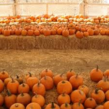 Pumpkin Patch Animal Farm In Moorpark California by Oma U0027s Pumpkin Patch 106 Photos U0026 97 Reviews Pumpkin Patches
