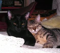 cats and yogurt cat food treats questions answered