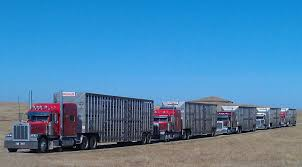100 Livestock Trucking Companies Home