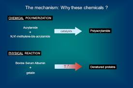 Acrylamide NN Methylene Bis Polyacrylamide Bovine Serum Albumin