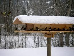 best 25 wooden bird houses ideas on pinterest birdhouses
