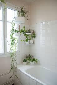 Fake Plants For The Bathroom by Bathroom Bathroom Artificial Plants Bathroom Plants 10 Bathroom